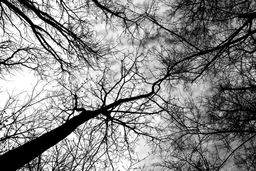 Dark Cloudy Trees by pronto185