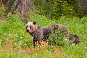 Feeding grizzlies by gnohz
