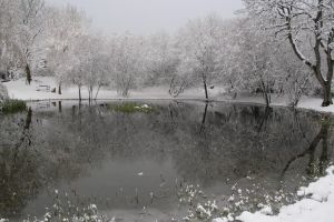 the pond by Tiger--photography
