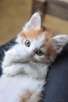 Caramel 1 by Red-Anchous