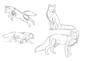 Fox Sketch Anatomy Practice by dayylights