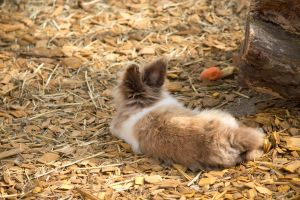 I is fluffy by RiaPi