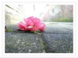 Ground flower by Tap-Photo-and-Co
