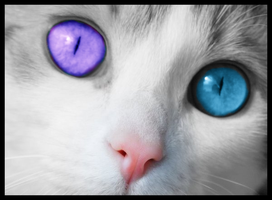 Cats Eyes by Vickyville