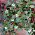 Little Flowers [Anaglyph 3D] by Foxtronic