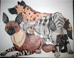 Hyena Species by CrazyCrocuta