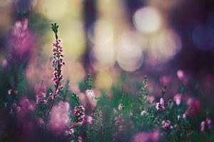 Pureness by Econita