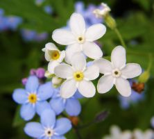 forgetmenots_different by trashcangirl