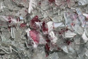 feathers blood and broken glas by lmrr-stock