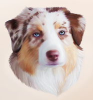 Commission: Australian Shepherd Portrait by eefilness