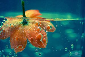 Bubble Flower by mqRina