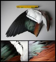 Egyptian Goose Wing by CabinetCuriosities
