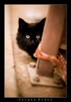 Black Kitty... by sergey1984