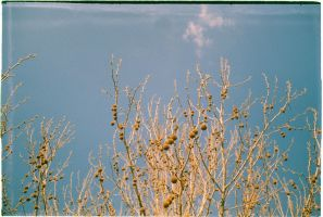 Lomo tree by xLaRiex