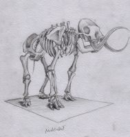Skeleton of Mammoth by InkOut