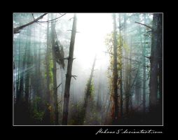 Forest in the fog II by kohone5