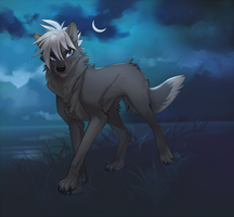 grey wolf by Orphen-Sirius