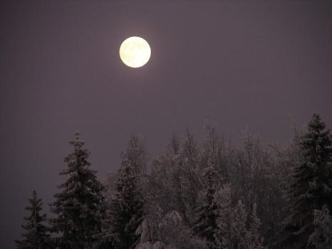 WinterNight by janniceblaze-photos
