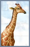 Watercolor Photo-study Giraffe by Freha