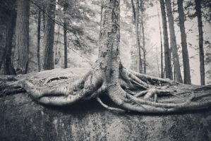 Roots by withlovexoxo