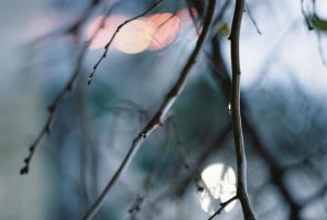Raindrops of February by Aqutiv