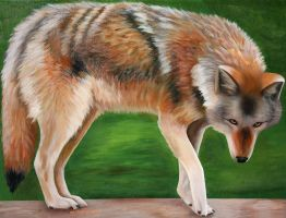 Coyote - Acrylics by machine-guts