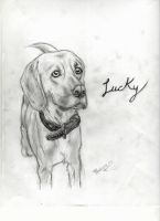 Lucky by Pipenagos