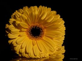 Yellow once again... by AgataSwat