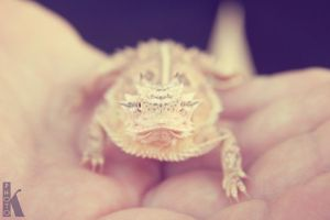 It's a Horny Toad by 0xkyleax0