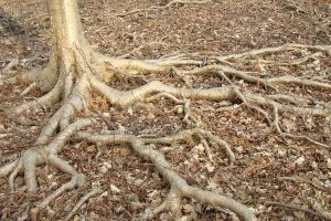 roots laid bare by asaph70