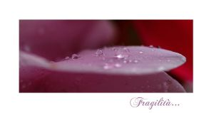 Fragilita by Nataly1st