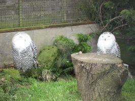 Happy Owls by AndrewNickson
