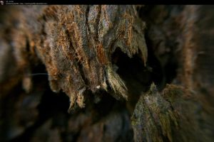 SS-0178 Magnified Redwood II by Stocking-Stuffer