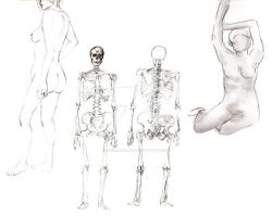 :: Sketch - Study of Anatomy:: by raye-minamino