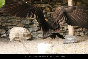 Vulture -Streamy stock by streamy-stock