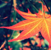 ..::Autumn Fires::.. by Whimsical-Dreams