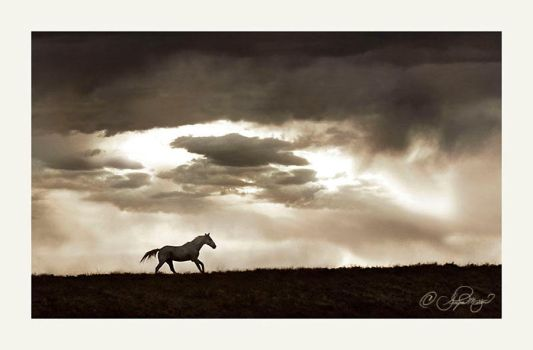 The coming storm by photocrafter