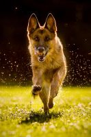 Laila II - to the rescue! by BlackPepperPhotos