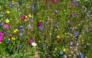 Wild Flowers by PamplemousseCeil