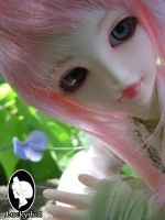 Pai: Lime Summer by LuckyDoll