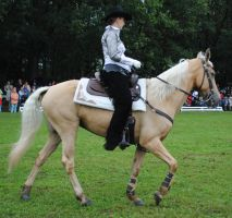 Tennessee Walking Horse 08 by ponystock