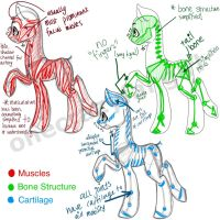 Pony Anatomy by ramidole