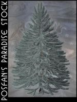 Blue Spruce by poserfan-stock