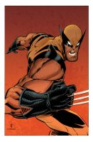 Wolverine color by JohnTimms