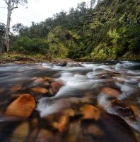 Howqua Valley Stream 2 by alexwise