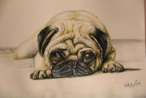 SWEETY PUG by MasteRstilo