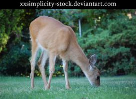 Deer 3 by xxsimplicity-stock