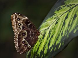 Butterfly Stock 01 by NellyGraceNG
