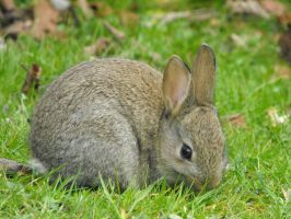 Young Rabbit at Antony House 1 by Sylars-Apprentice