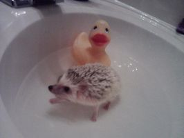 Rubber ducky your the one by MarMargoesRUFF